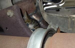 Un chat parcourt 500 km sous le capot d'une voiture