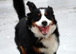 Mon chien est hyperactif : que faire ?