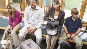 Intoxication chez le chien ou le chat : réagir en urgence