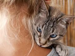 Maltraitance : ces femmes qui restent pour protéger leurs animaux