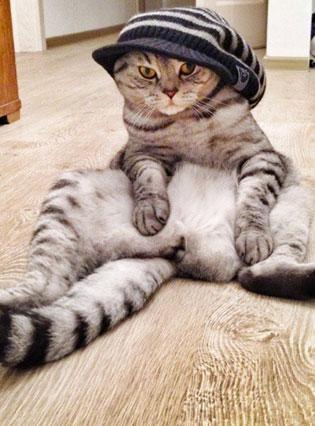 Niki, ce chat étrange qui s'assied comme les humains