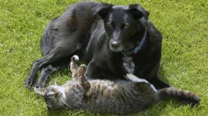 Parasites chez le chien et le chat : traiter aussi l'environnement
