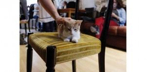 Chats, chiens... se retrouvent au salon de l'animal de compagnie