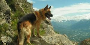 Dévasté par la mort de son chien, il décède et lègue sa fortune à la SPA