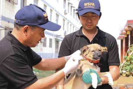 Le bien-être animal ajouté dans l'enseignement de la médecine vétérinaire ?
