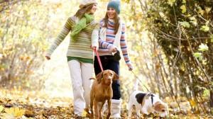 Chiens et chats : bien aborder l'arrivée de l'automne