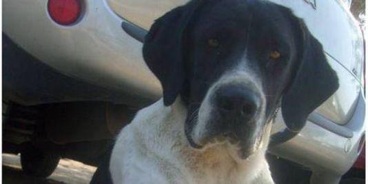 En Corse, Whisky le chien écrasé à l'heure d'Internet