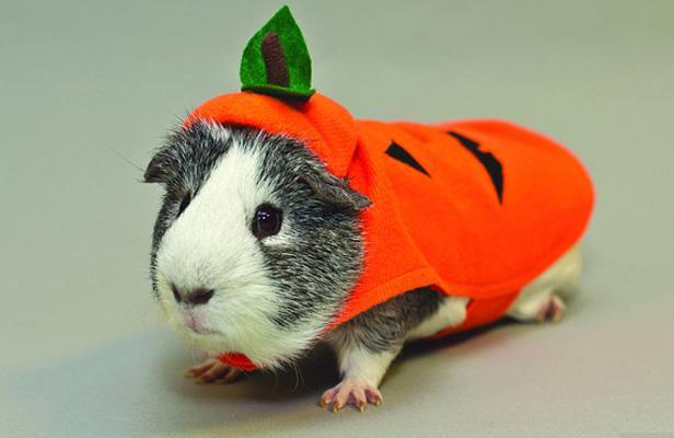 Etats-Unis: Les costumes pour animaux font fureur pour Halloween