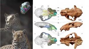 Le plus vieux fossile de grand chat découvert au Tibet