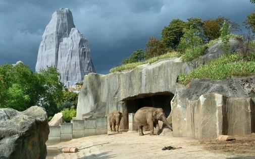 Les animaux du zoo de Vincennes à la recherche de parrains