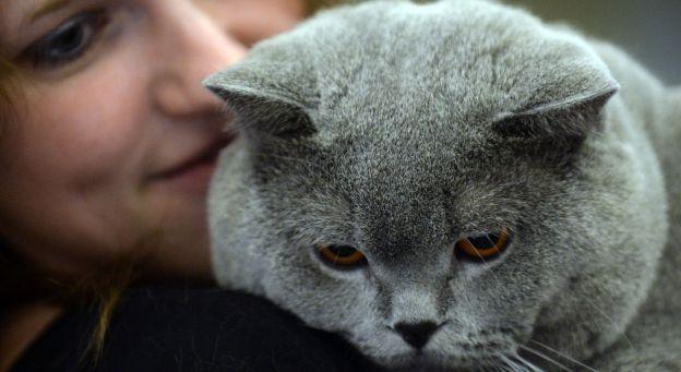 Rage: il faut se méfier des animaux ramenés de l'étranger