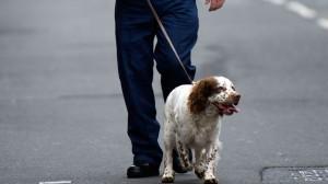 En Angleterre, les chiens policiers toucheront une retraite