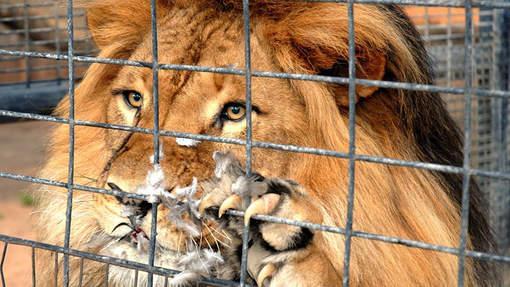 Le Costa Rica ferme ses zoos: les animaux relâchés