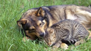 Offrir un chien ou un chat pour noël : une bonne idée?