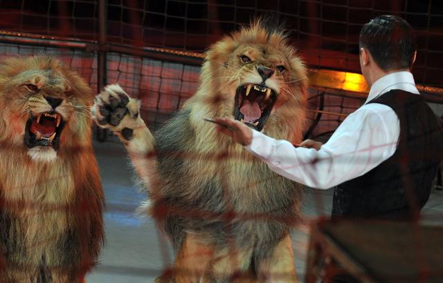 Les animaux sauvages interdits des cirques belges