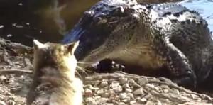 """""""Caïman"""", le chat qui dompte les alligators"""