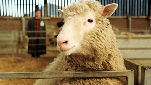 L'Europe veut interdire le clonage d'animaux d'élevage