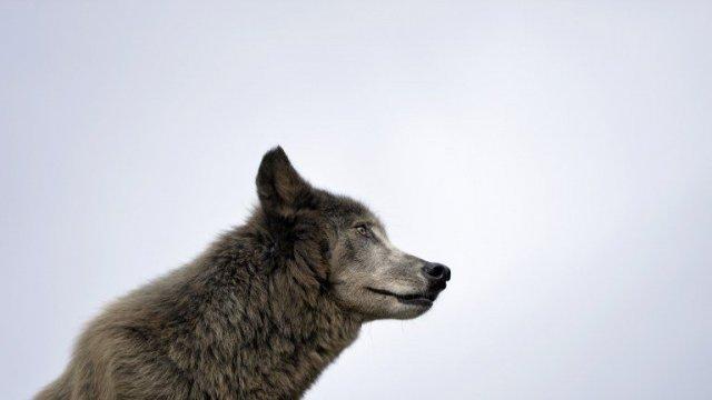 Les défenseurs des animaux veulent une trêve hivernale