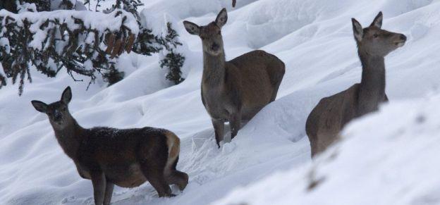Des zones de tranquillité pour protéger les animaux sauvages