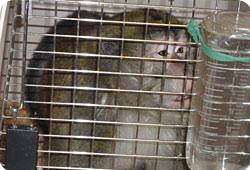 Expérimentation - Nouvelle vie pour d'anciens animaux de laboratoires