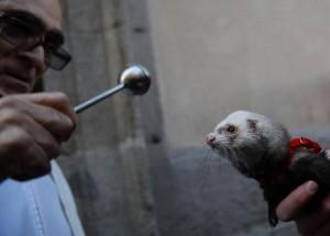 Du «chat botté» au coati, la bénédiction des animaux à Madrid pour la Saint-Antoine