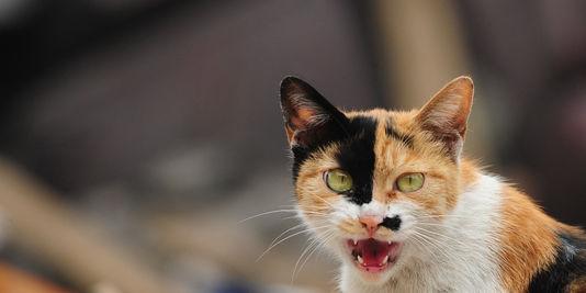 Le chat, meilleur ami des premiers fermiers ?