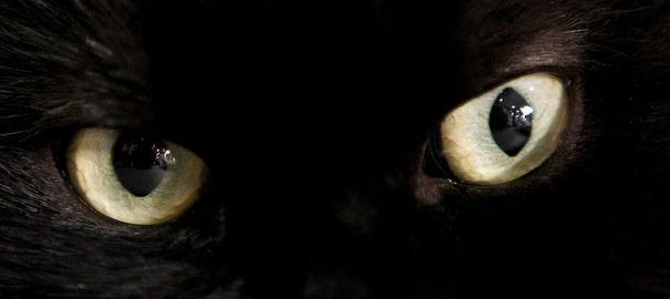 Un chat revient chez ses maîtres après 10 ans d'absence