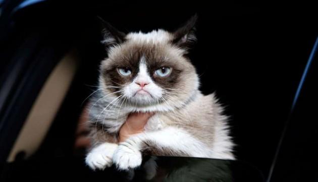 Pour votre chat, vous êtes un peu débile : c'est parce qu'il ne comprend pas vos réactions