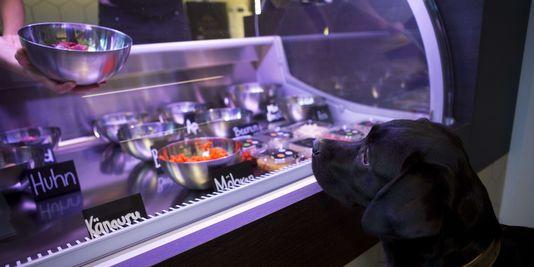 Berlin accueille une épicerie de luxe pour chiens et chats