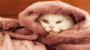 Le froid affecte aussi les animaux