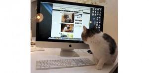 Le chat, coqueluche du web et des internautes