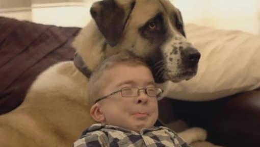 L'amitié incroyable d'un enfant malade et d'un chien à trois pattes
