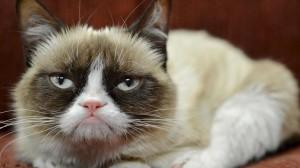 Les chats, ces aristocrates d'Internet