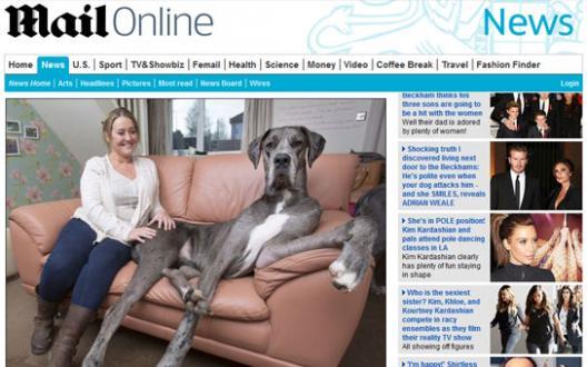 Incroyable: découvrez le plus grand chien d'Angleterre, de la taille d'un âne