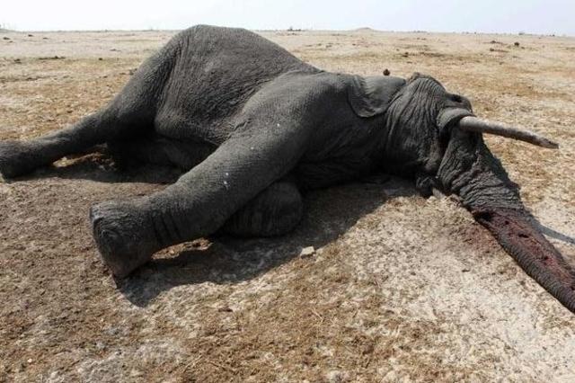 Une conférence pour mettre fin au massacre d'animaux