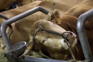 Hollande préfère que les animaux restent des biens meubles