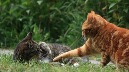 Les morsures de chats sont plus graves qu'on ne le pense