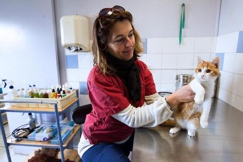 Quelles sont les peines pour cruauté envers les animaux domestiques ?
