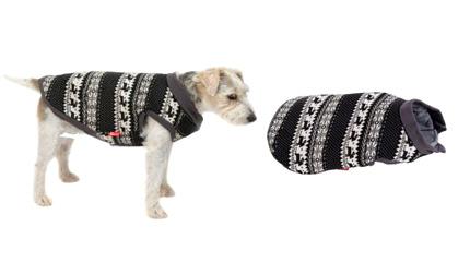 Pull norvégien pour chien