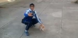 """Le """"lanceur de chat"""" condamné à un an de prison ferme"""