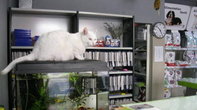 Marseille : les secrets de Chamallow, le chat expert en évasion