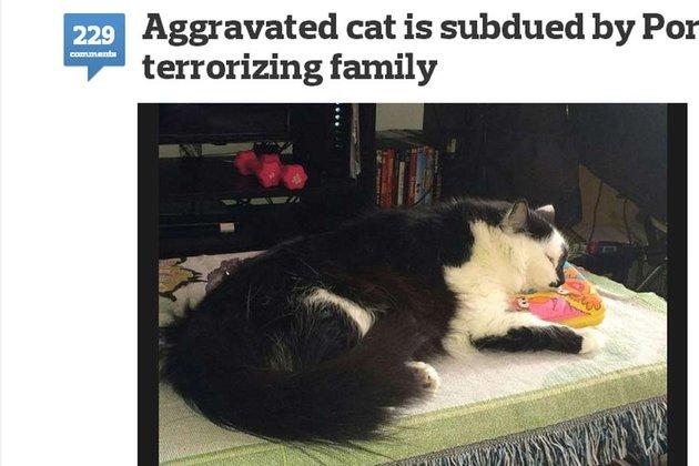"""Un chat de 10 kilos """"prend en otage"""" une famille"""