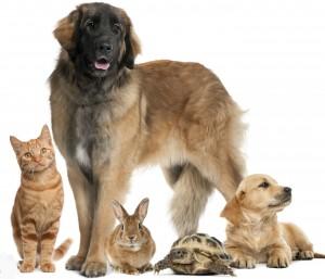 Chien, chat ou lapin? Votre préférence en dévoile beaucoup sur vous!