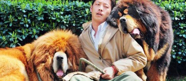 Chine : voici le chien le plus cher du monde !