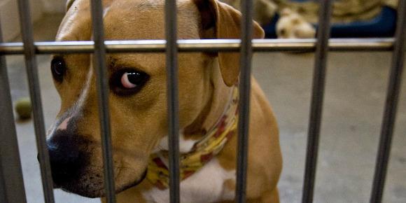 Elle laisse mourir son chien après une lente agonie: 2 mois ferme