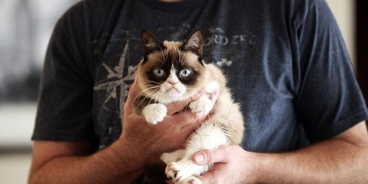 Rencontre avec Grumpy Cat, le chat à 1 million de dollars