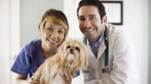 Leishmaniose chez le chien : lancement de la première campagne méditerranéenne