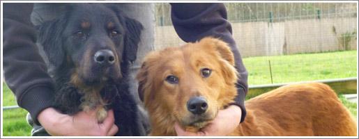 Maltraitance - Un chien meurt de faim, deux animaux sauvés in extremis