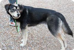 Maltraitance - Il tire sur son chien à bout portant, la Fondation porte plainte