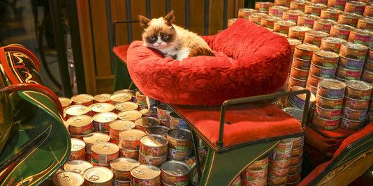 Le marché en or des croquettes pour animaux